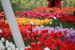 Vor allem auch in großen verglasten Häusern kann man die Blumen bewundern.