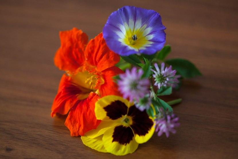 Balkonblumen voller Farbenpracht
