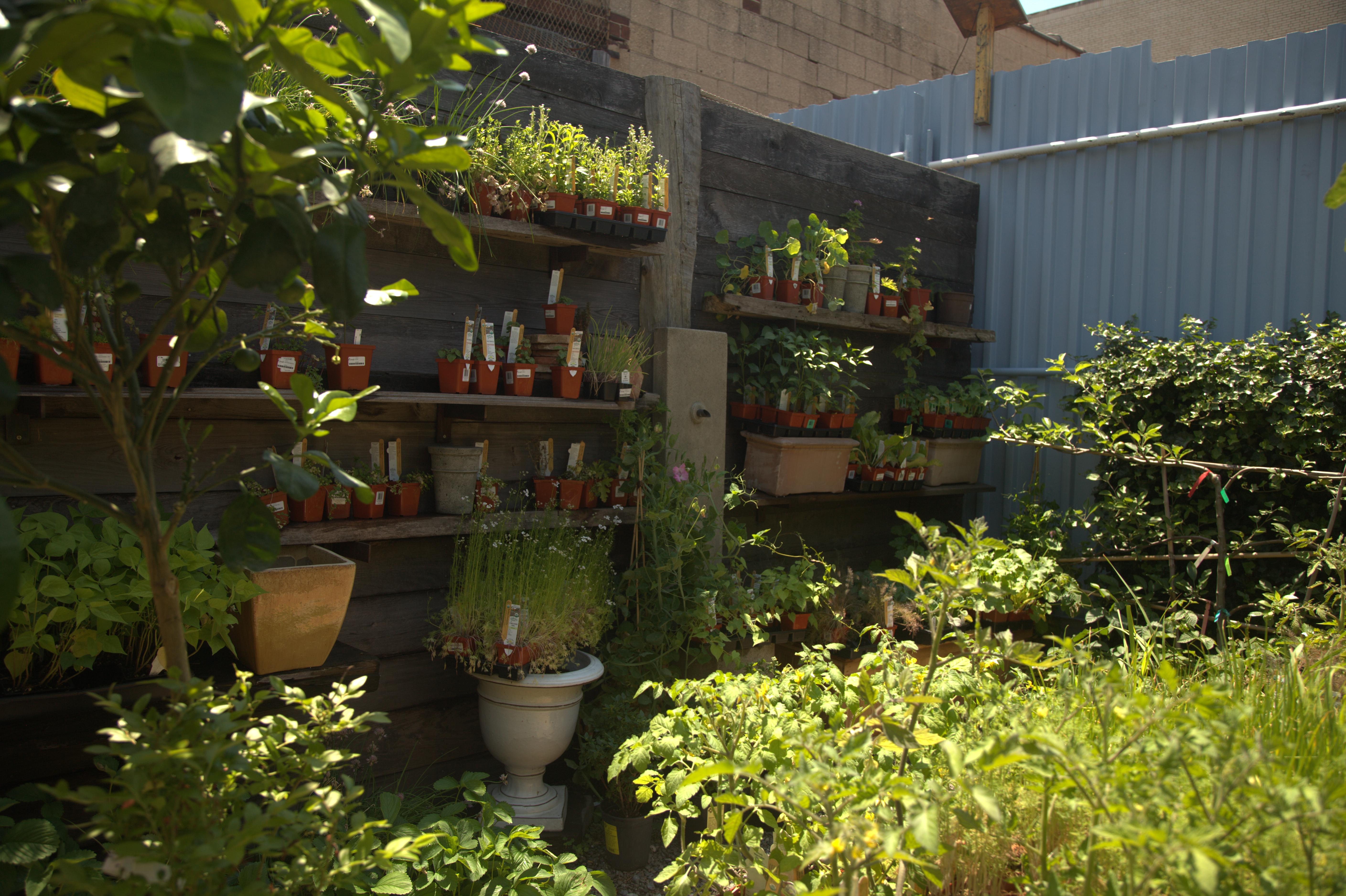 im Jungle Cafe gibt es nicht nur Cafe im Grünen. Die Pflanzen, die dort wuchsen, können Besucher auch kaufen. Ein bisschen Grün hat noch niemandem geschadet! IMG_4920