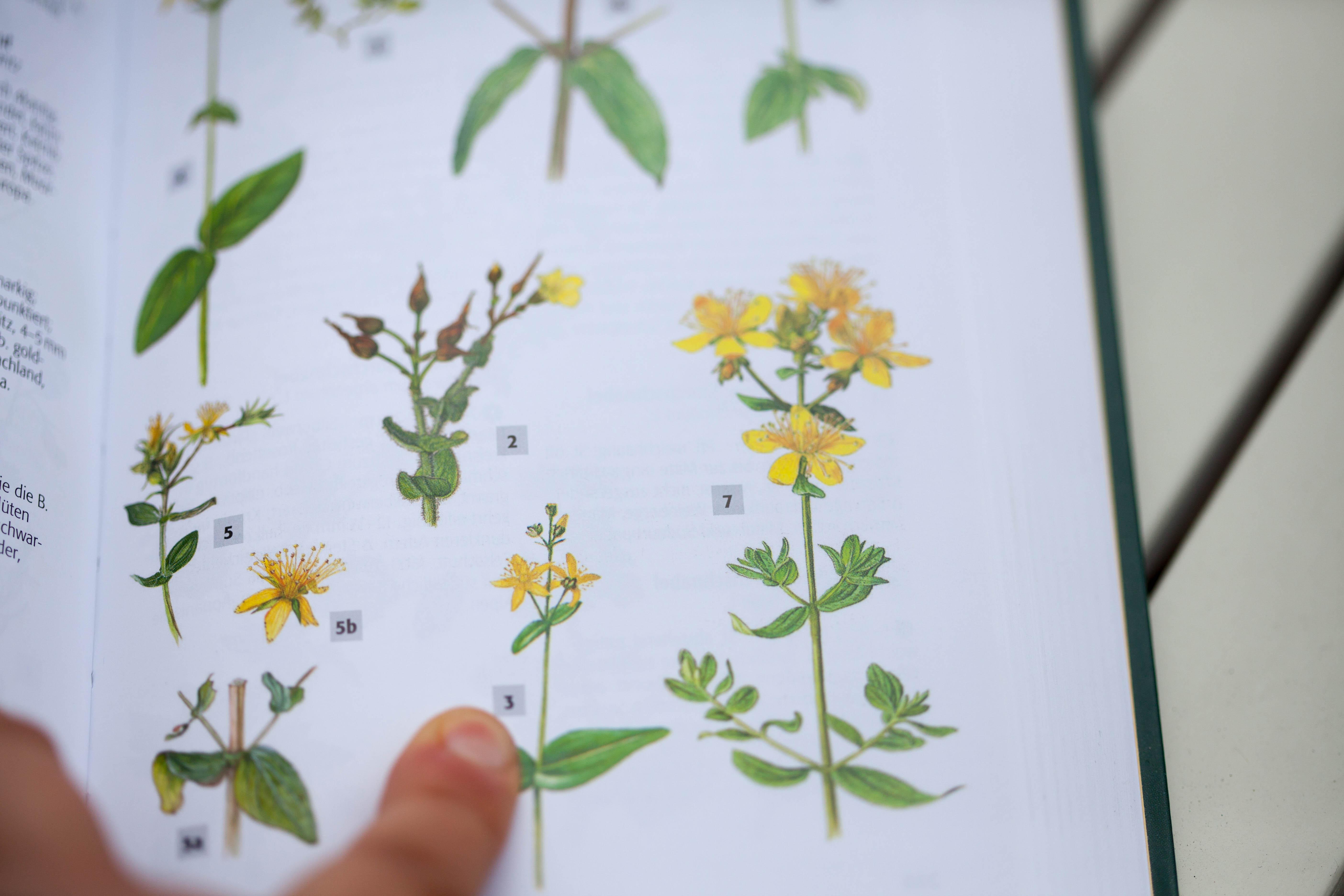 Detailgetreue Pflanzenzeichnungen