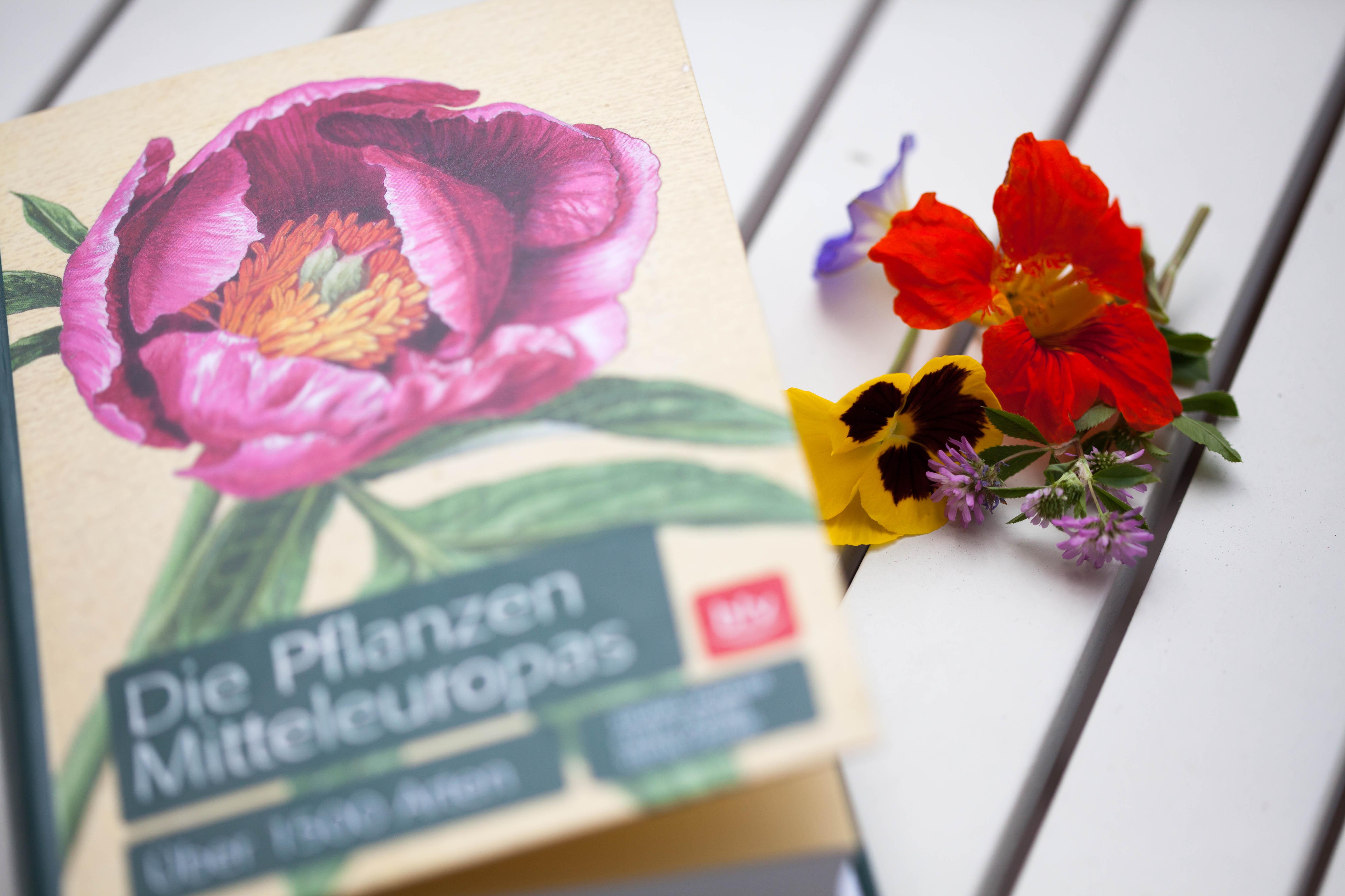 Die Pflanzen Mitteleuropas in einem tollen Lexikon