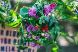 Auf dem Stadthonigfest waren die Stände der einzelnen Aussteller liebevoll mit den Blumen der Saison dekoriert.