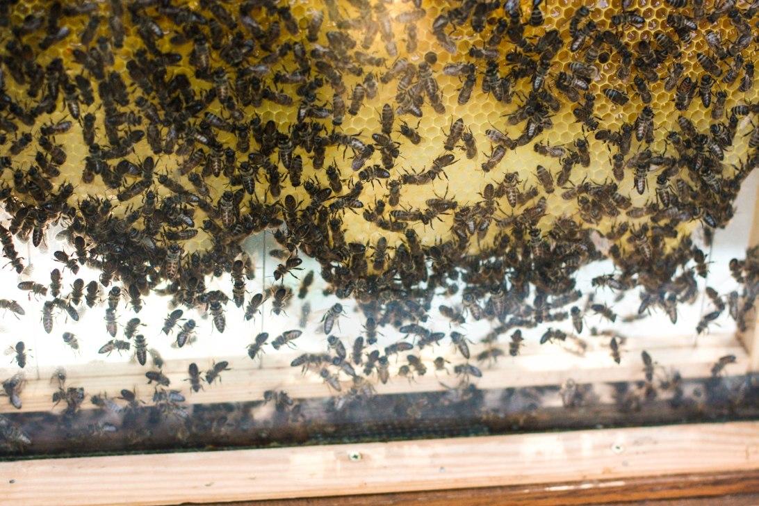 Bienen sind fleißige soziale Insekten.