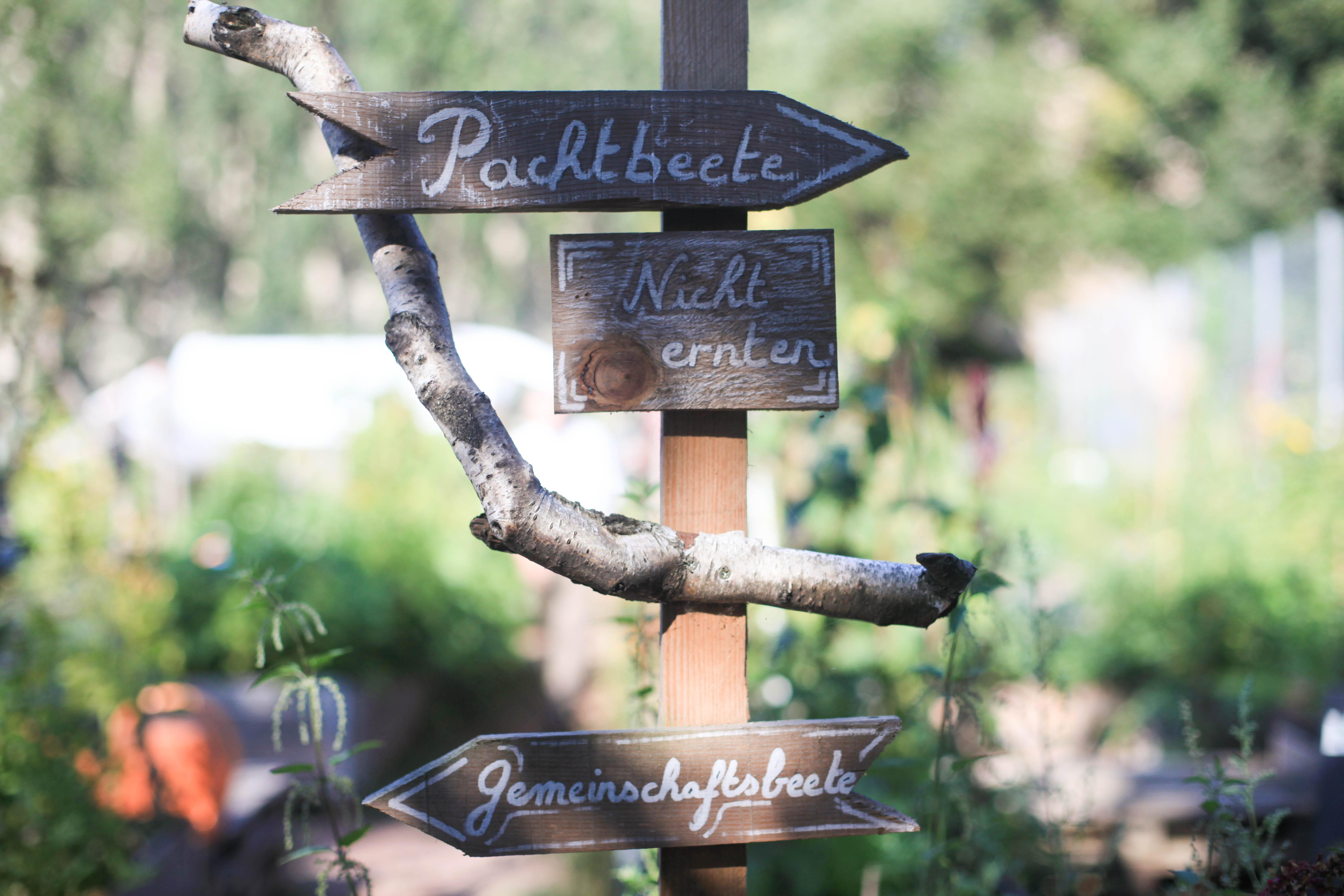 Es gibt Pachtbeete, die ihr für ein Jahr privat pachten und nutzen kann und einen Gemeinschaftsgarten, wo alle mithelfen können.