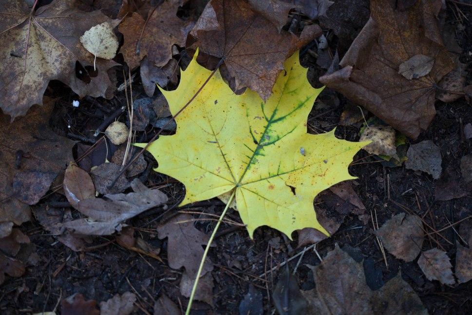 Bäume werfen im Herbst zum Schutz ihre Blätter ab.
