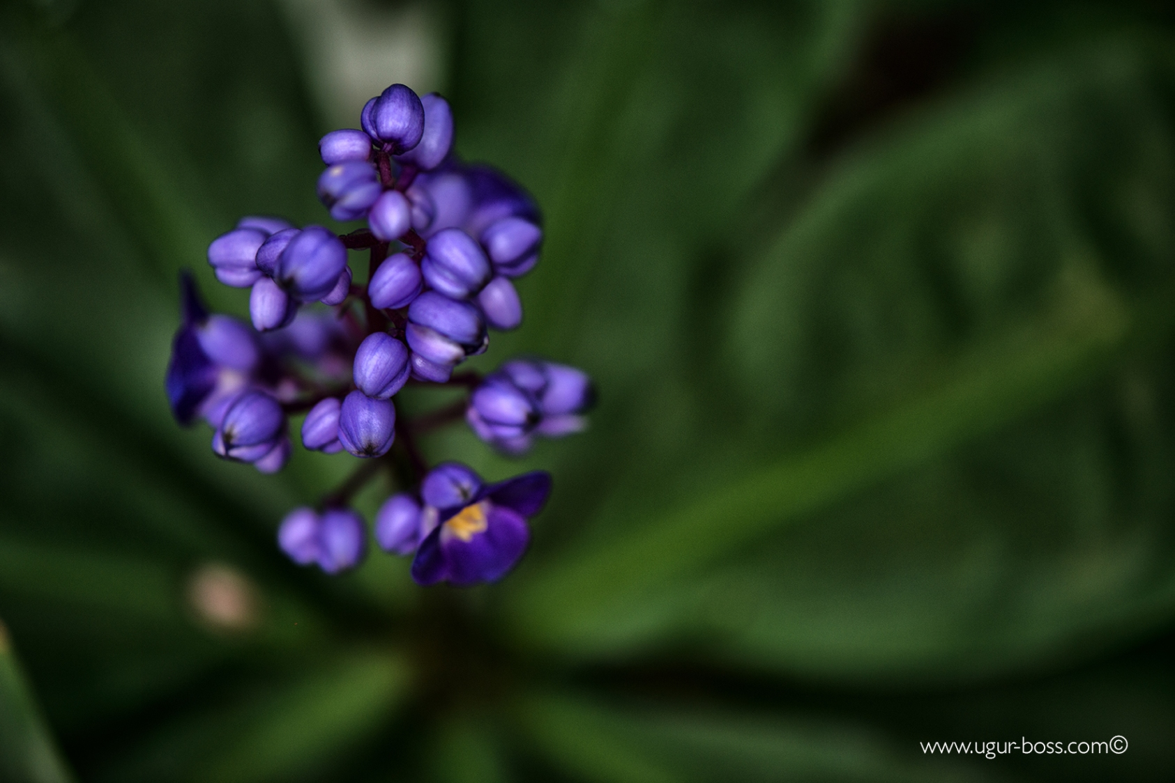 Der Botanische Garten Berlin ist ein Highlight für Pflanzenliebhaber!