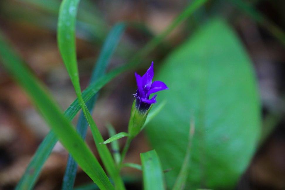 Über 1.200 Pflanzenarten gibt es im Nationalpark Plitvicer Seen.
