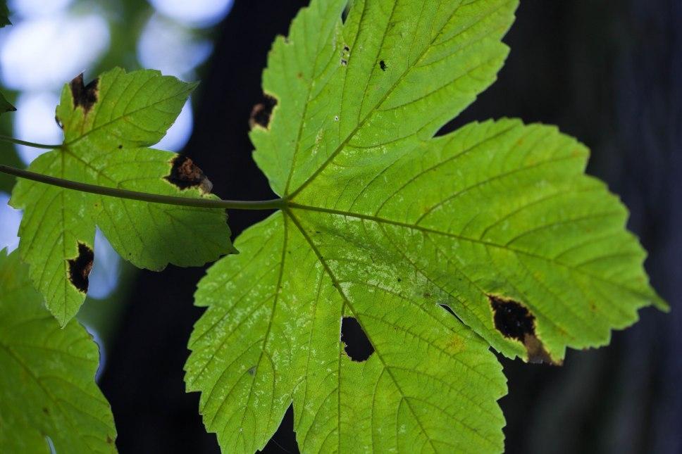 Noch hängen ein paar grüne Blätter an den Bäumen.