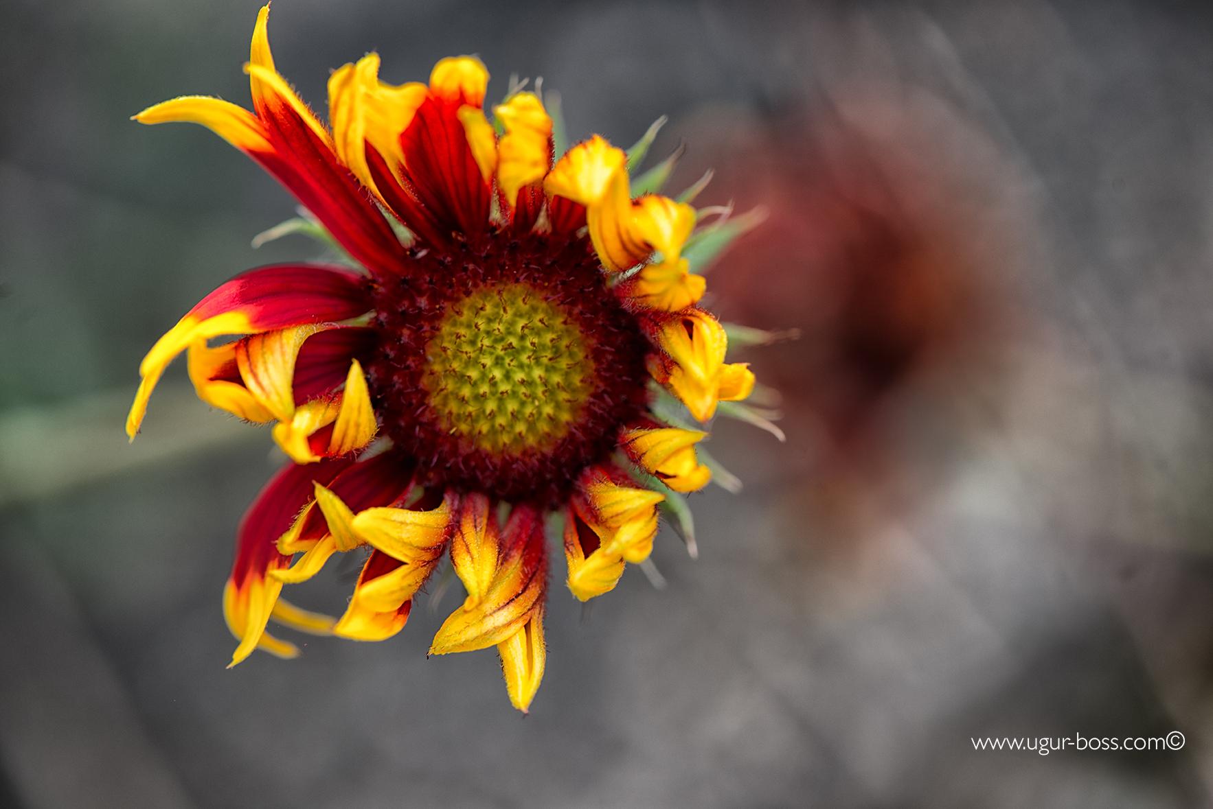 Zierpflanzen pflanzenblog for Design von zierpflanzen