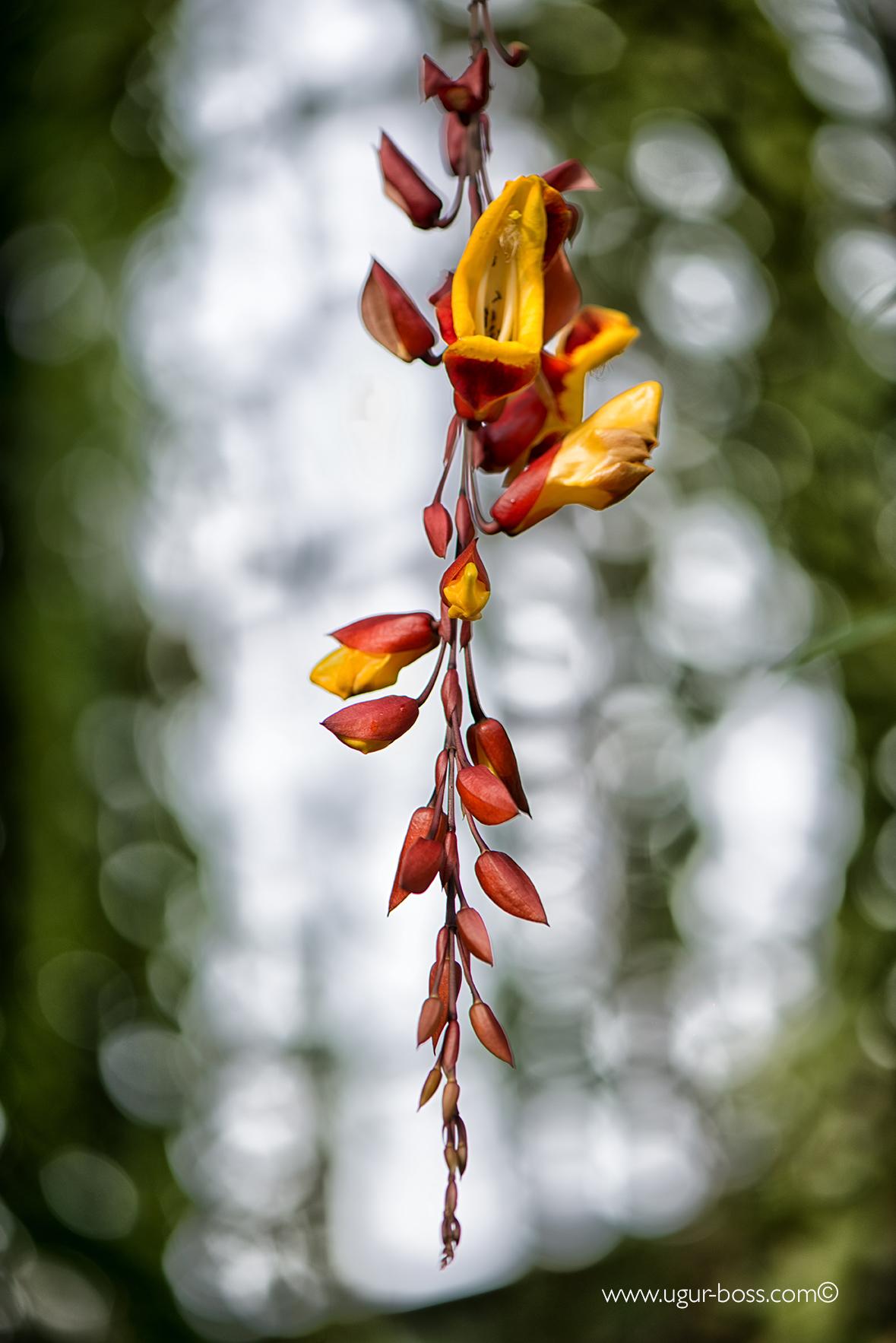 Herbstbilder aus dem botanischen garten berlin tolle for Berlin pflanzen