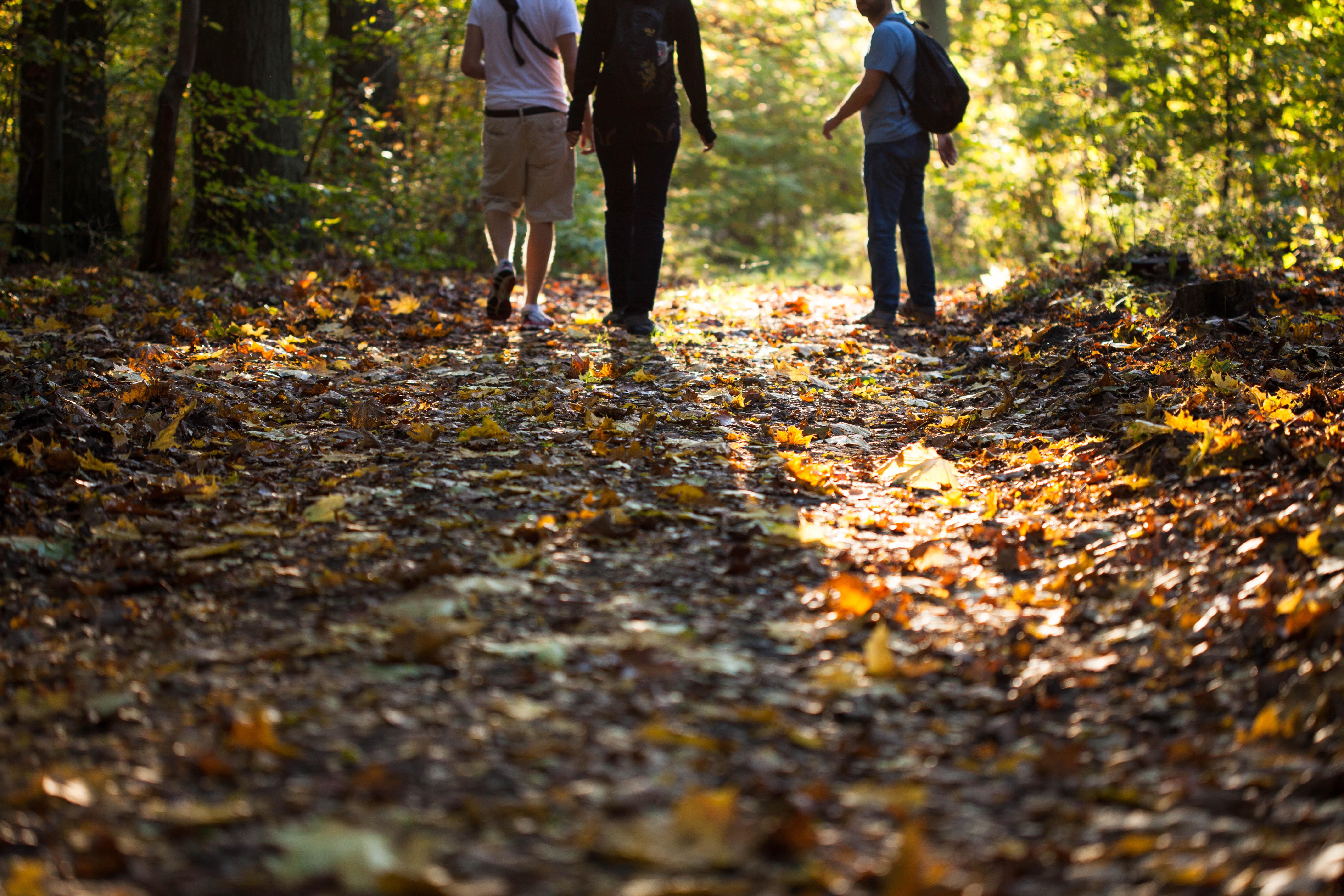 Warum verfärben sich im Herbst die Blätter der Bäume? – Pflanzenblog