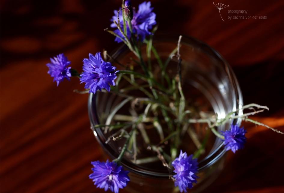 Kornblumen sind auch Heilpflanzen. Ihre Bitter- und Gerbstoffe sollen bei Beschwerden des Verdauungsapparates helfen.
