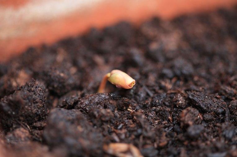 Nährstoffreicher Boden ist wichtig für die meisten Pflanzen.