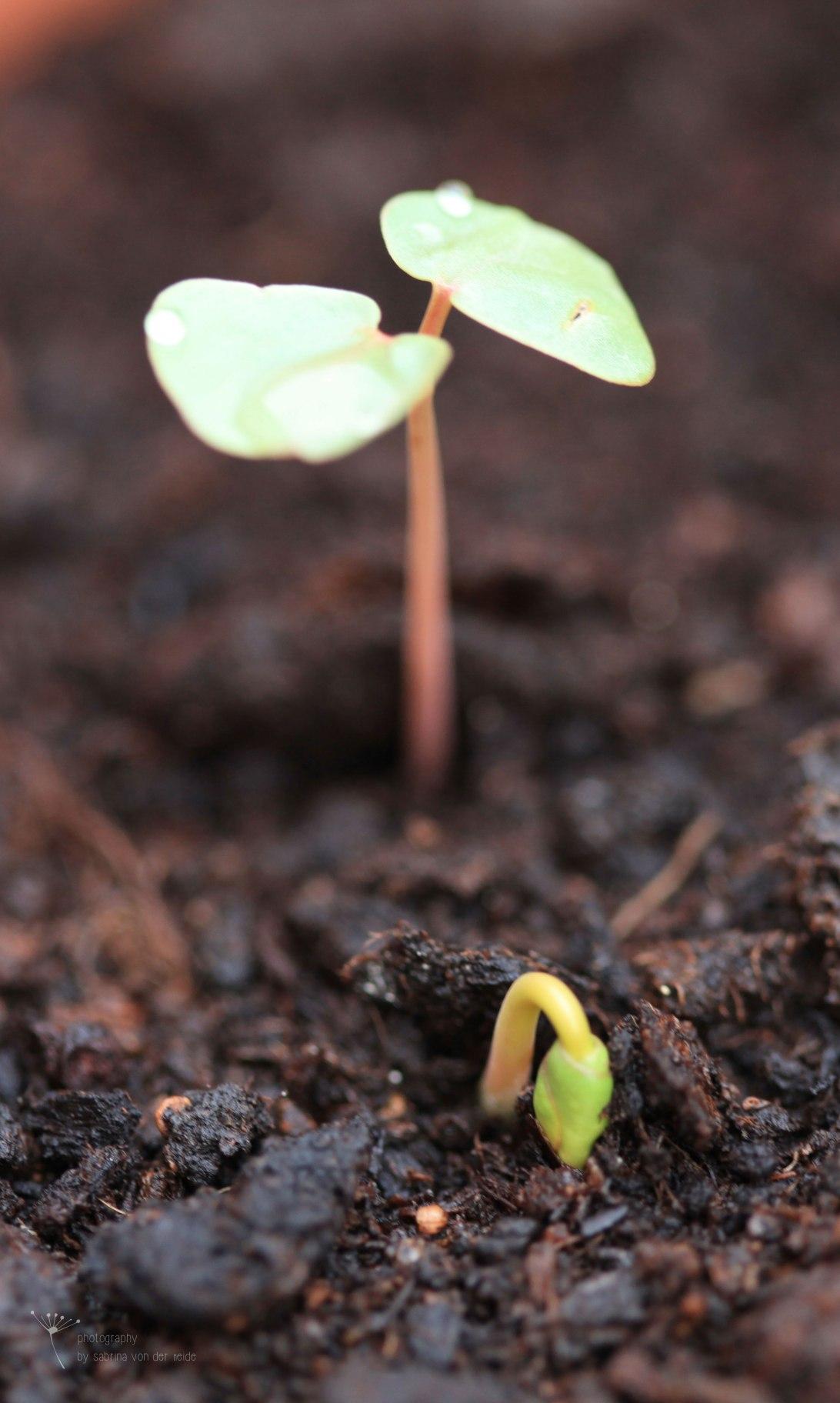 Die meisten Pflanzen lieben nährstoffreiche Böden.