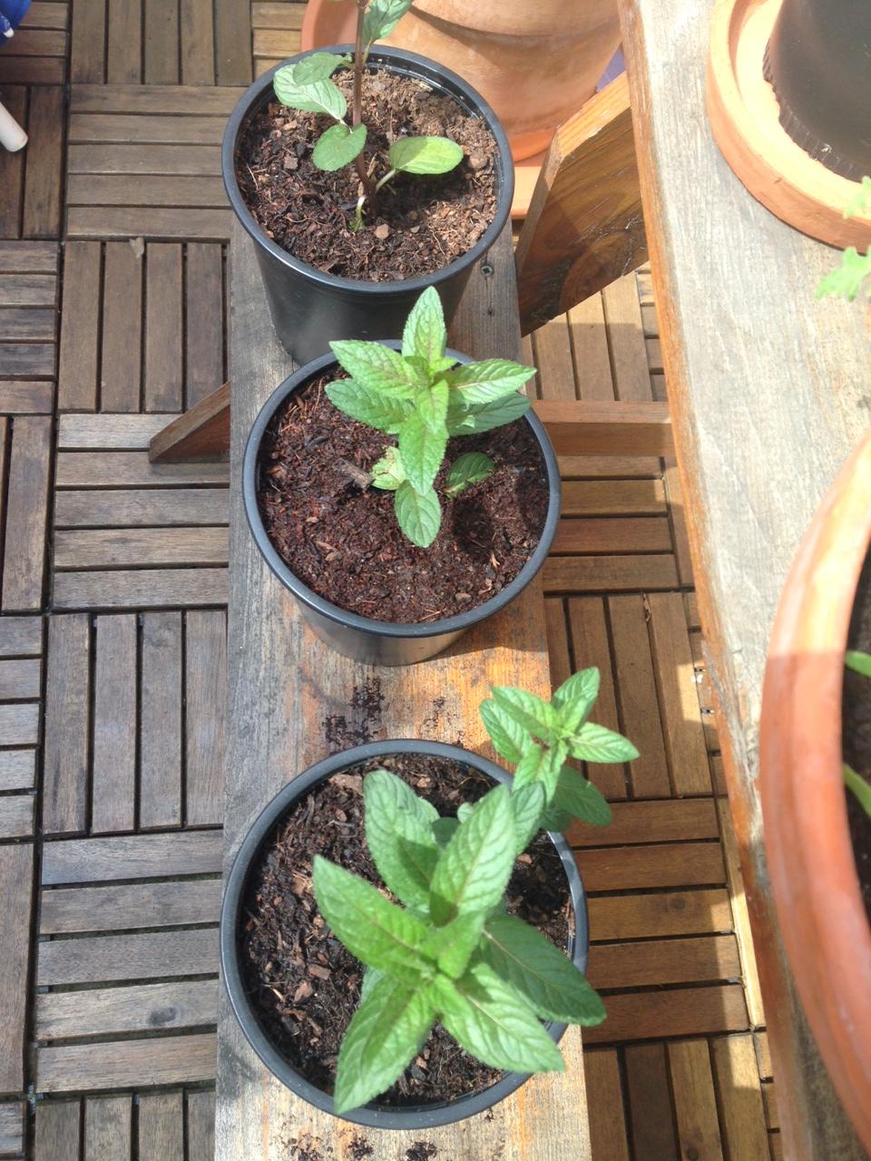 pflanzenblog seite 2 blumen sind pflanzen. Black Bedroom Furniture Sets. Home Design Ideas