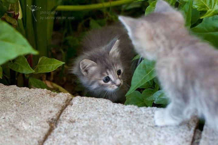 Zwei Katzenkinder in Michelas Kräutergarten.