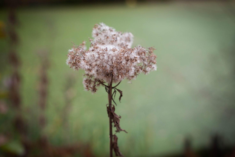 Pflanzen können auch im Herbst schön aussehen.