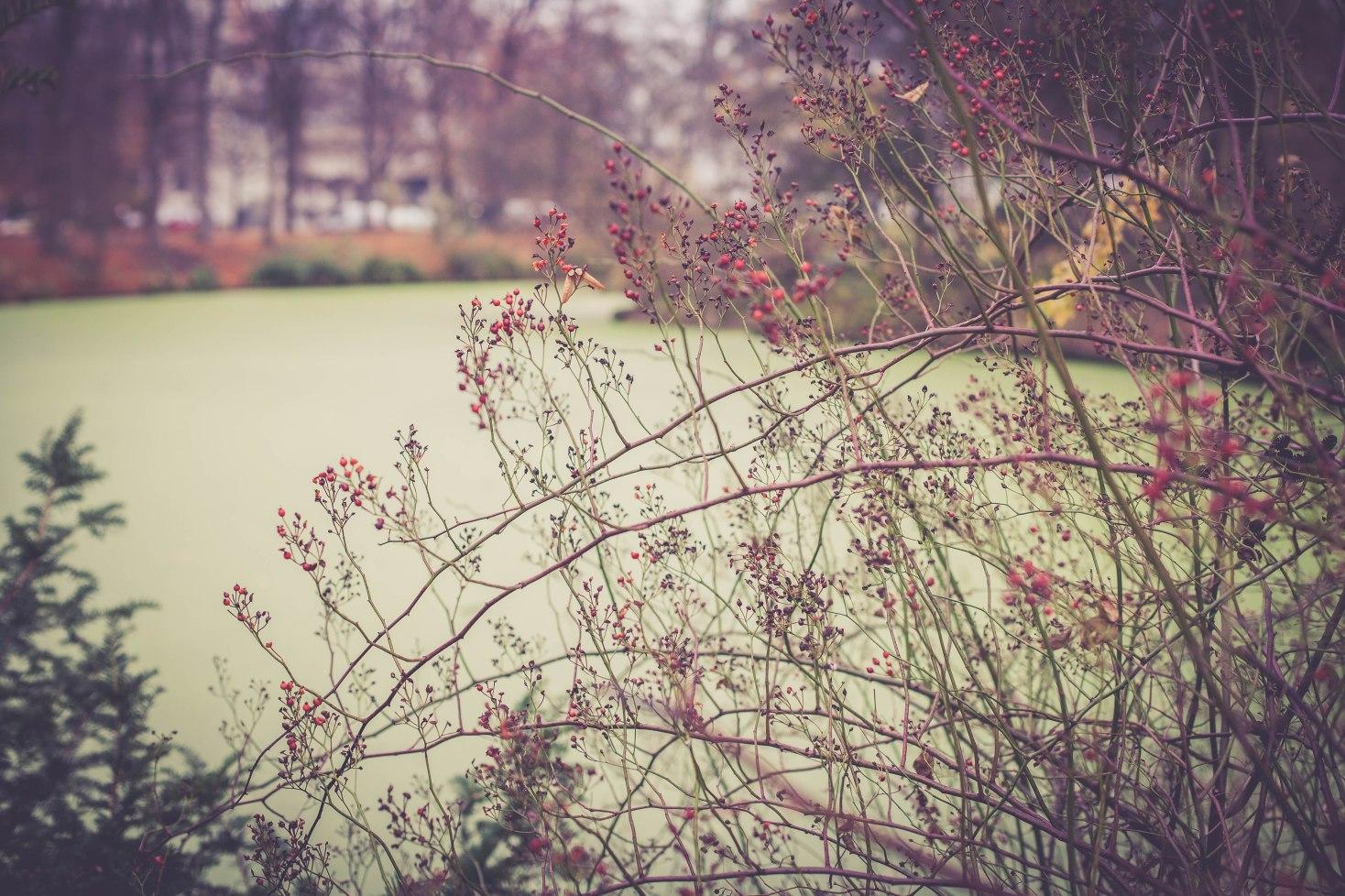 Die Früchte des Herbstes sind wie die Blüten im Frühling und Sommer.