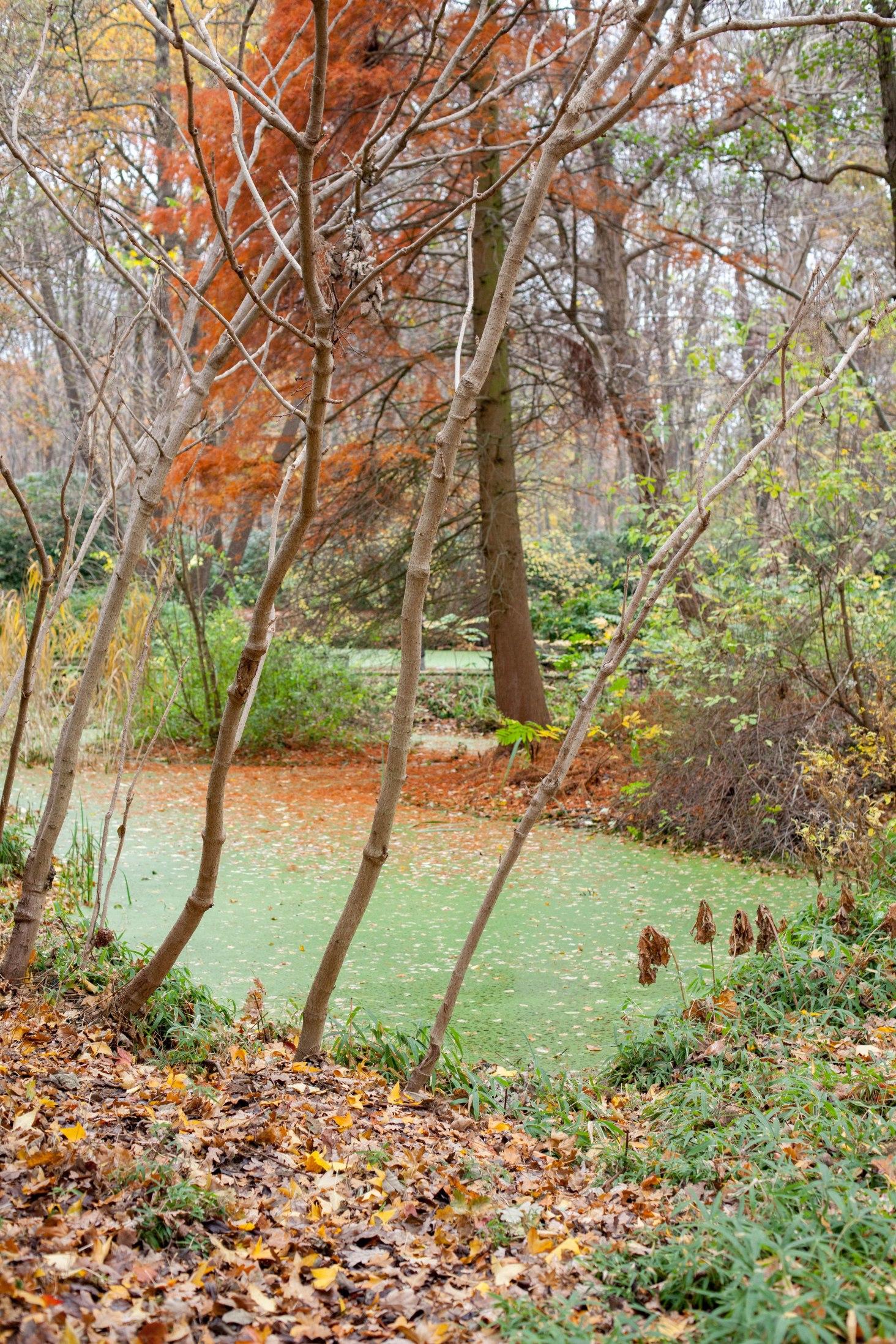 Nutzt die Gelegenheit und geht durch den Großen Tiergarten spazieren, wenn ihr in der Nähe wohnt oder arbeitet oder seid.