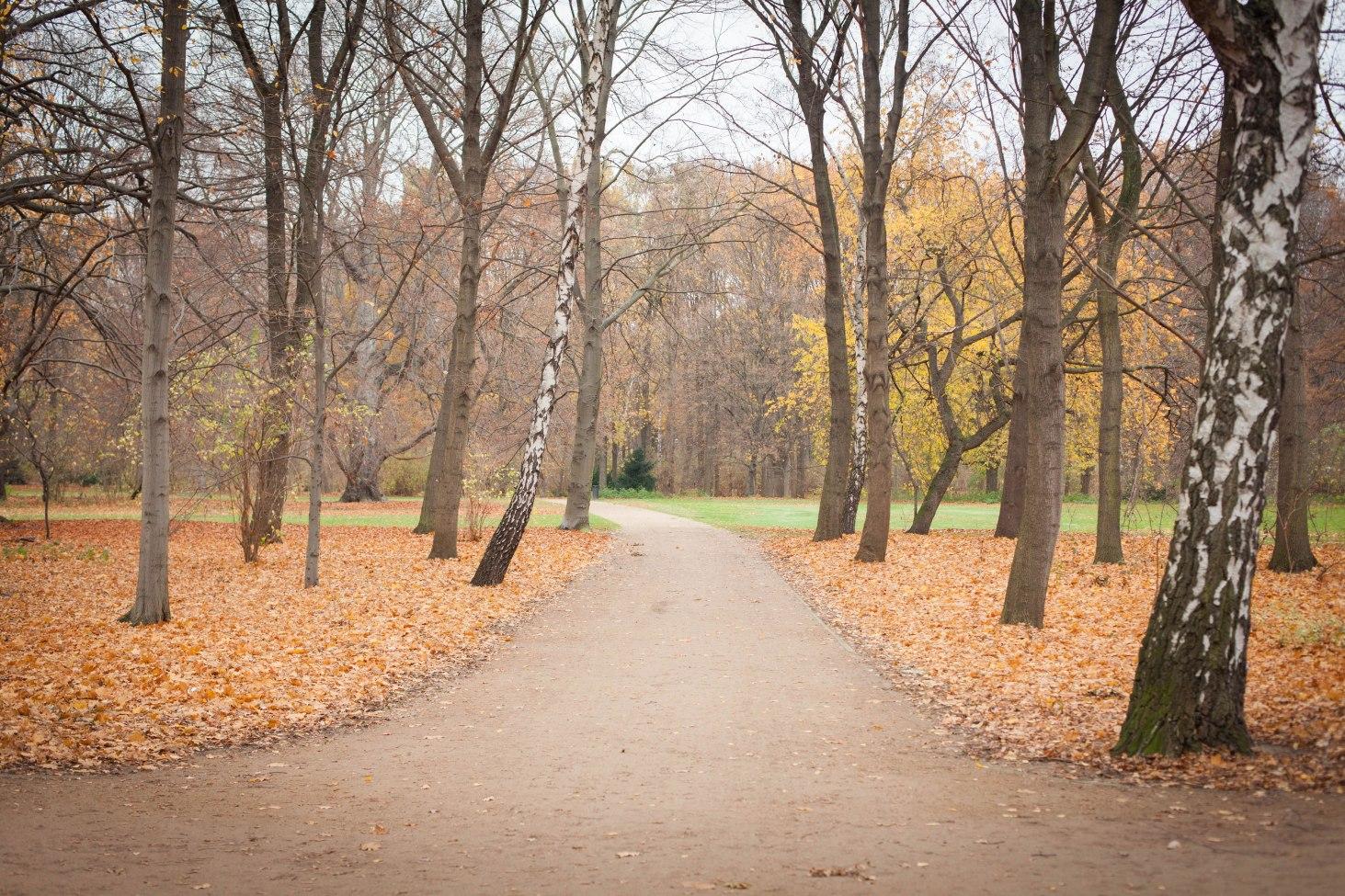 Großzügig angelegte Wege führen durch den Berliner Park.