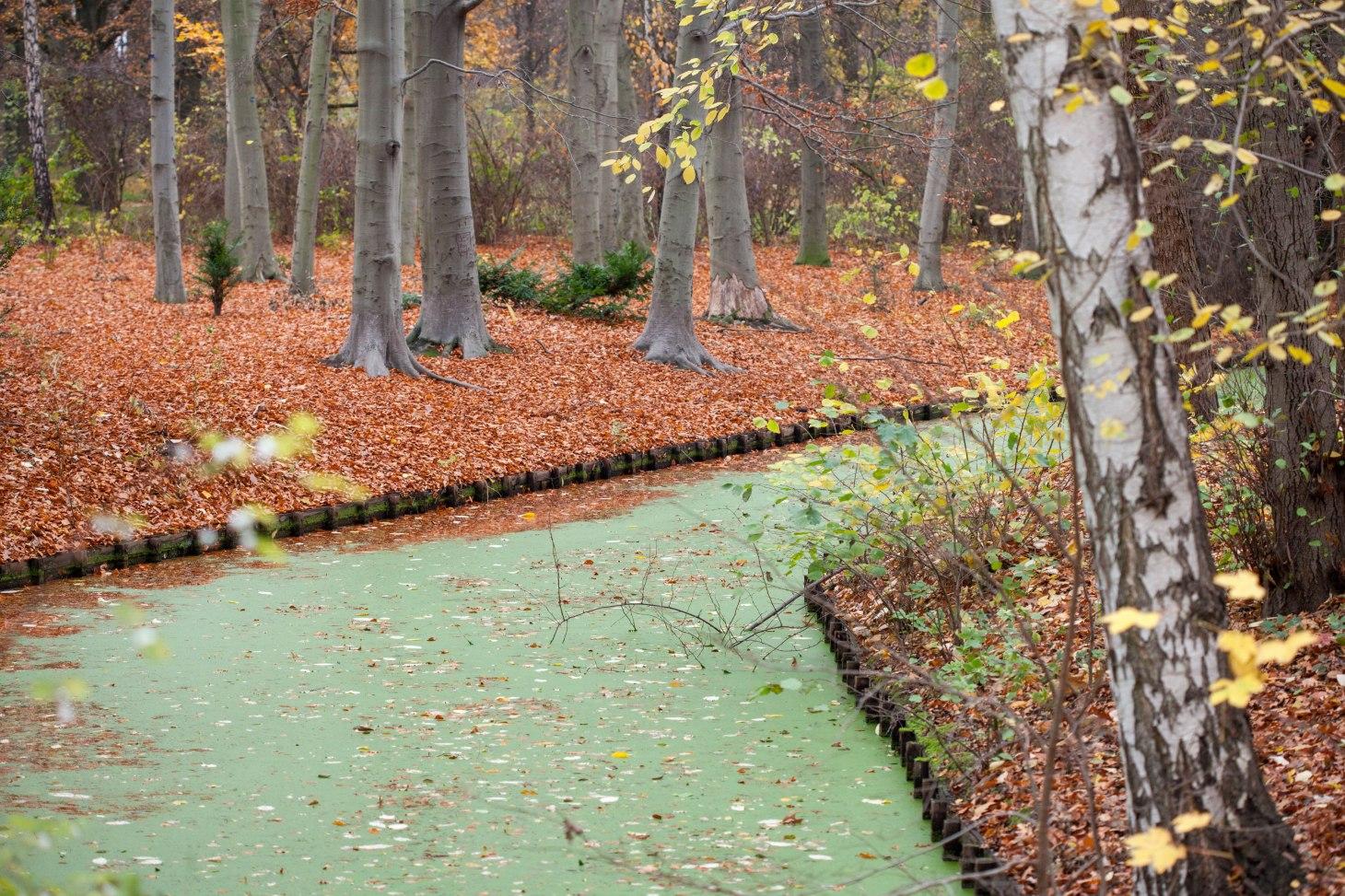 Der kleine Fluss nennt sich Tiergartengewässer und ist ein kleiner Seitenarm der Spree.